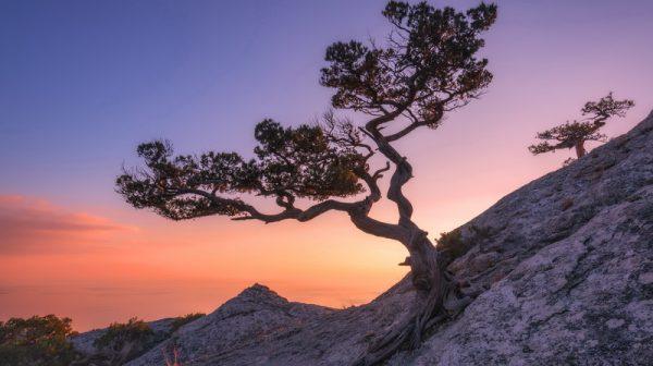 Tree on rock in Crimea